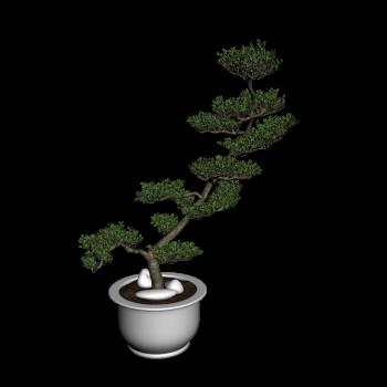 bonsai baum design and decorate your room in 3d. Black Bedroom Furniture Sets. Home Design Ideas