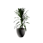 House palm