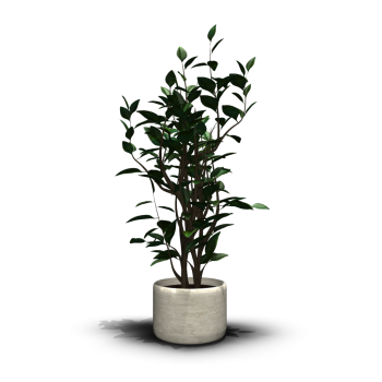 House Plant Design And Decorate Your Room In 3d