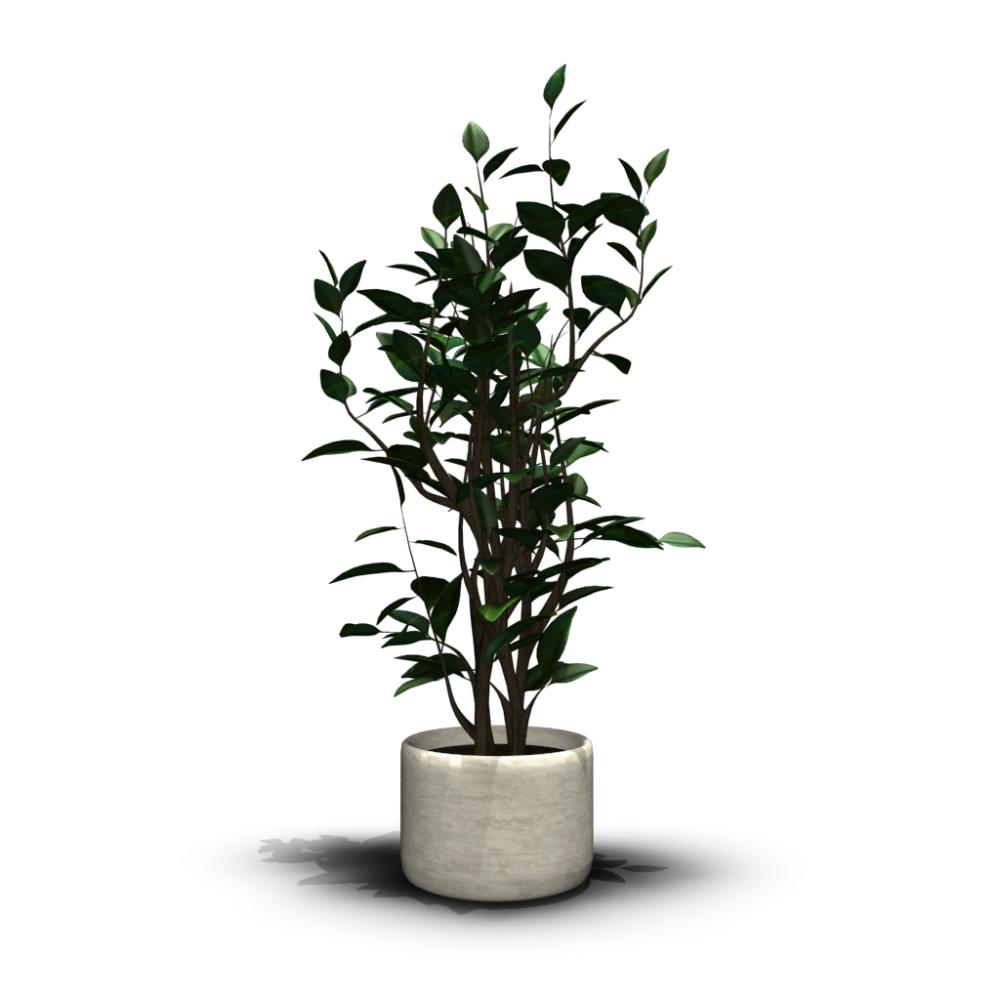 Office Plant Png