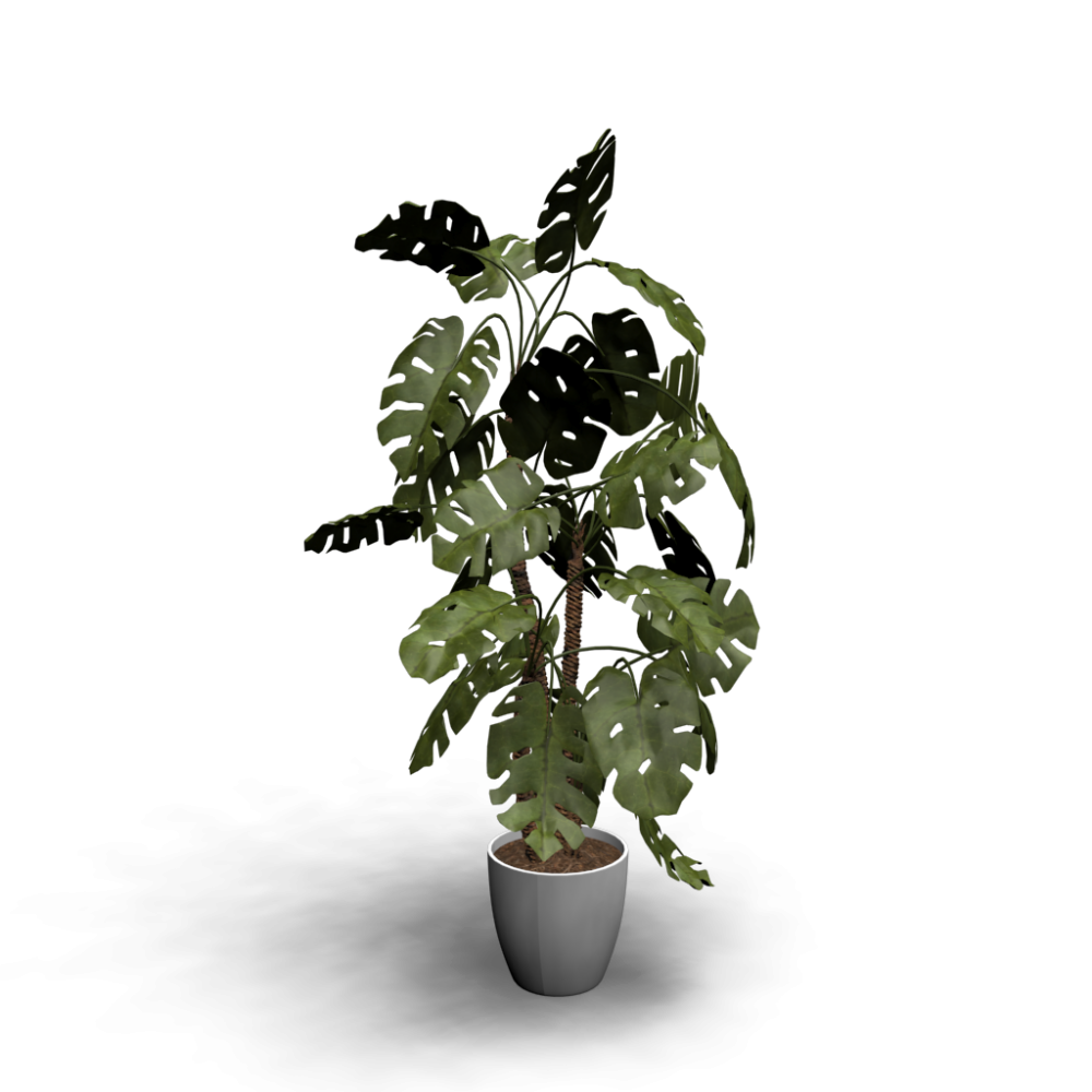 Monstera Design And Decorate Your Room In 3d