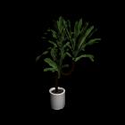 Yucca Palme für die 3D Raumplanung
