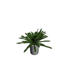 Yucca Palme klein für die 3D Raumplanung