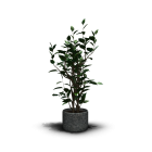 Zimmerpflanze für die 3D Raumplanung