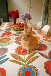 Auch hervorragend zu Ostern!© Annabel Grey Fabrics